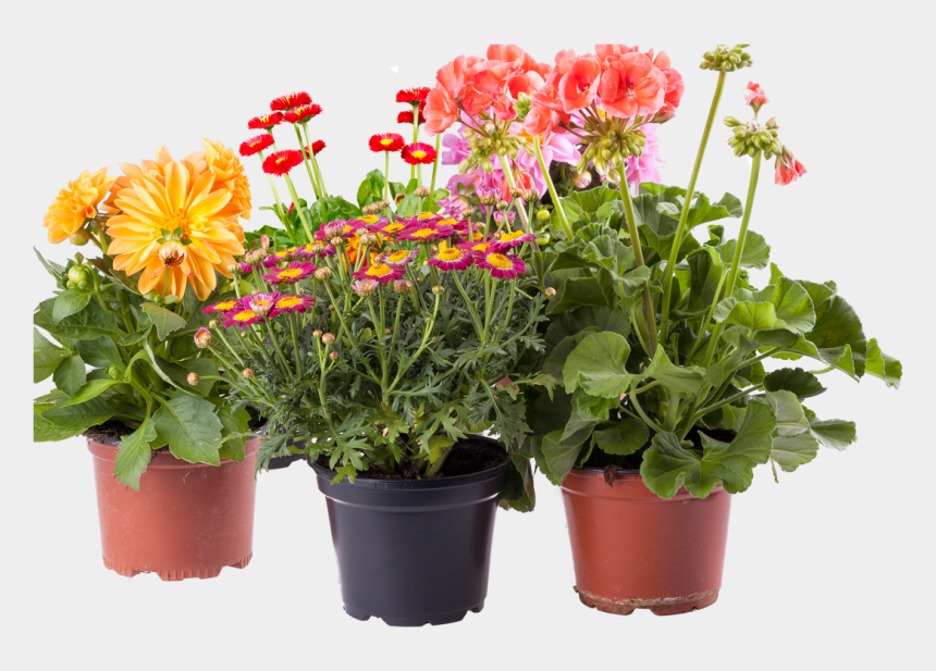 potted flower clipart, Cartoons - Potted Flowers Png - Pot Plants Flowers Png