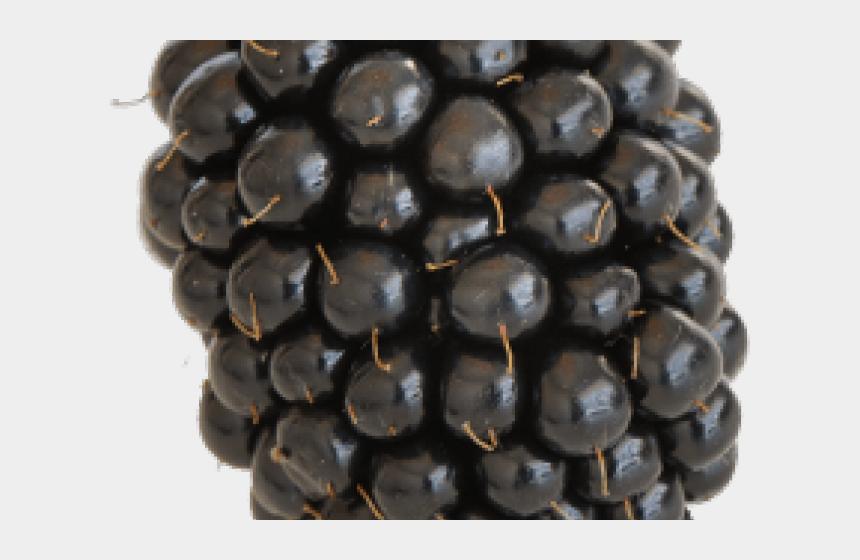 blackberry fruit clipart, Cartoons - Blackberry Clipart Blueberry Tree - Berry