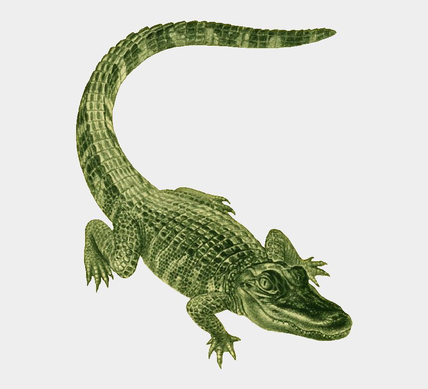 cute alligator clipart black and white, Cartoons - Alligator Clip Art - Green Alligator