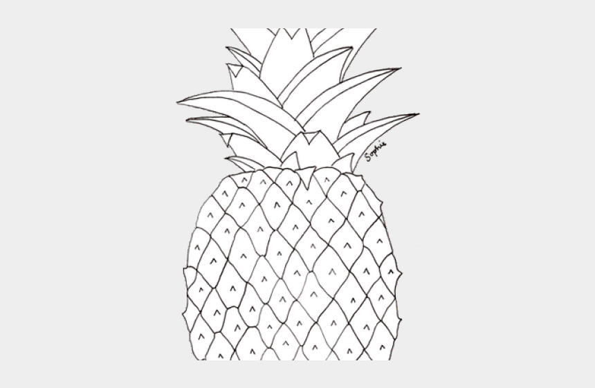 pineapple clipart black and white, Cartoons - Drawn Pineapple Transparent - Pineapple Pictures To Colour