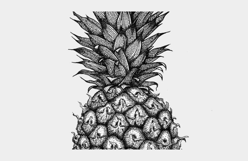 pineapple clipart black and white, Cartoons - Clipart Of The Day - Pineapple Drawing
