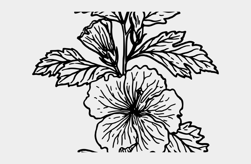 hibiscus flower clipart black and white, Cartoons - White Flower Clipart Hibiscus - Simple Hawaiian Flower Drawing Hibiscus Clipart
