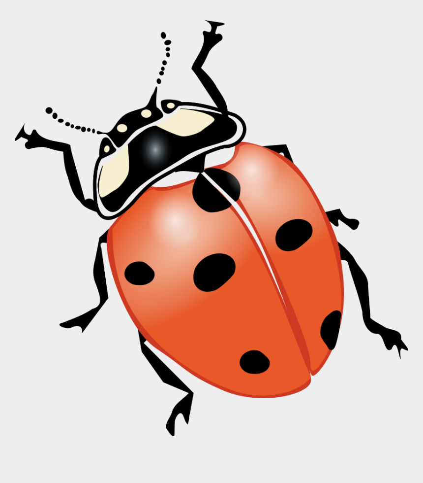 lightning bugs clipart, Cartoons - Clipart Of Bug, Ia And Lightning Bug But - Bugs And Insects Printables