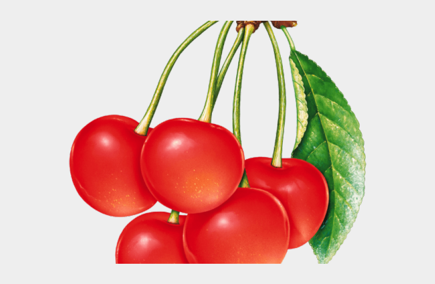 cherryclipart, Cartoons - Cherry Clipart Three - Painted Pictures Of Fruits