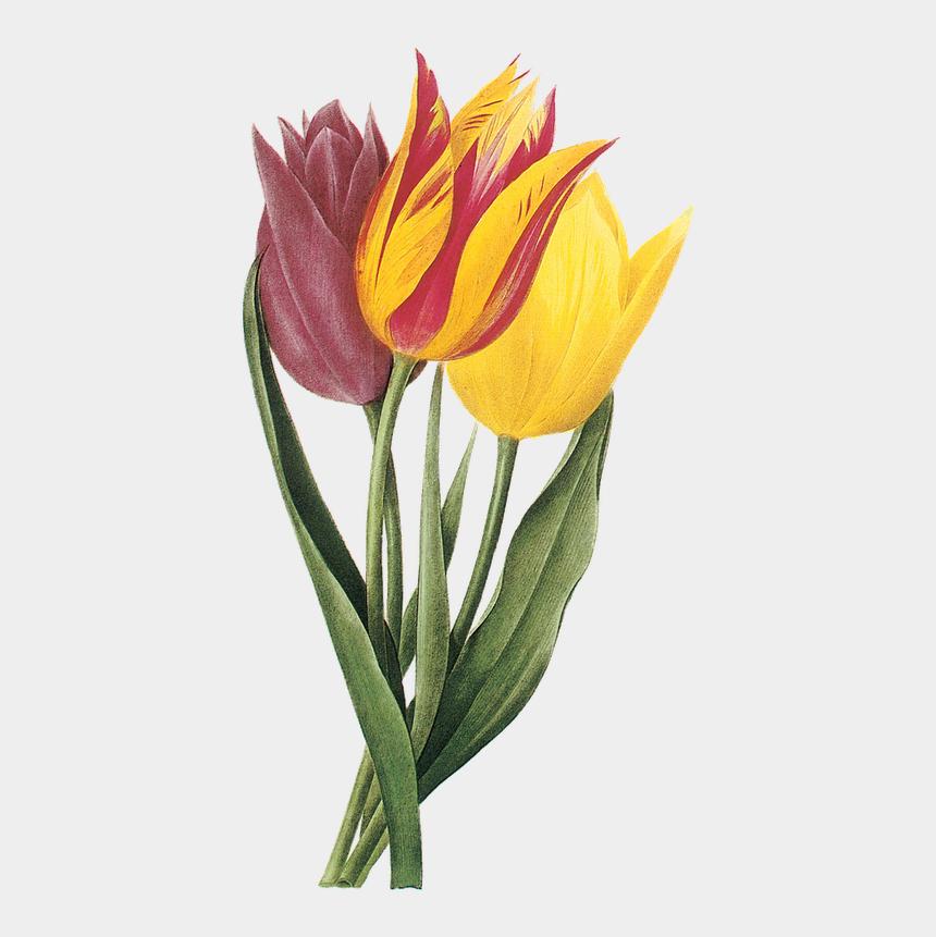yellow tulips clipart, Cartoons - Скрап Клипарт «180 » На Яндекс - Tulip Flower Print