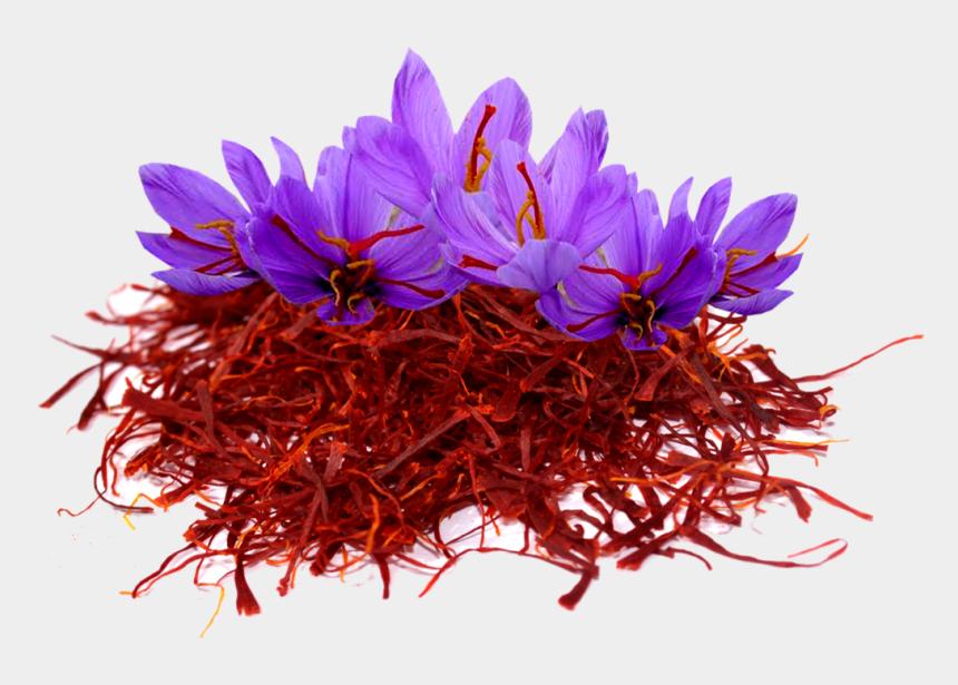 crocus flower clipart, Cartoons - Saffron Png Image File - Saffron Flower Png