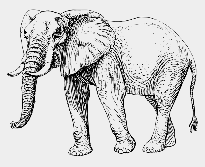 african animals clipart black and white, Cartoons - Elephants Black And White Drawing Mammal White Elephant - Elephant Black And White