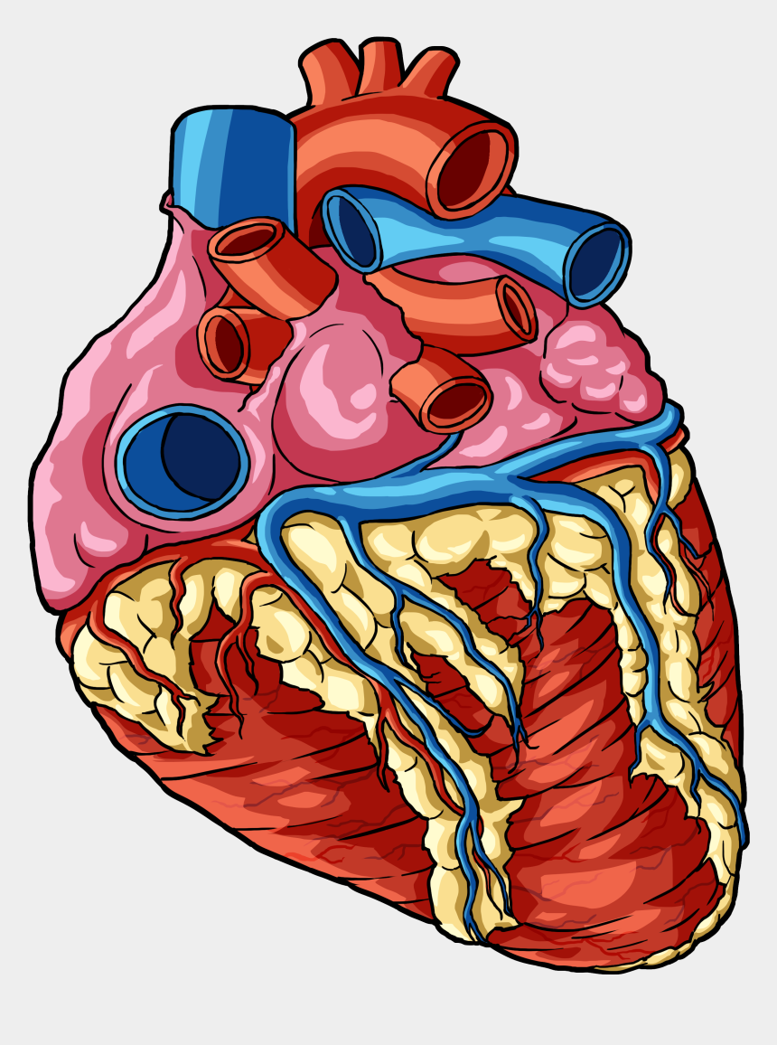 human body parts clipart, Cartoons - Heart 1 - Human Body Parts Png
