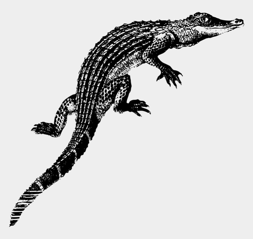 baby alligator clipart, Cartoons - Alligator Baby Kids T-shirt - Alligators