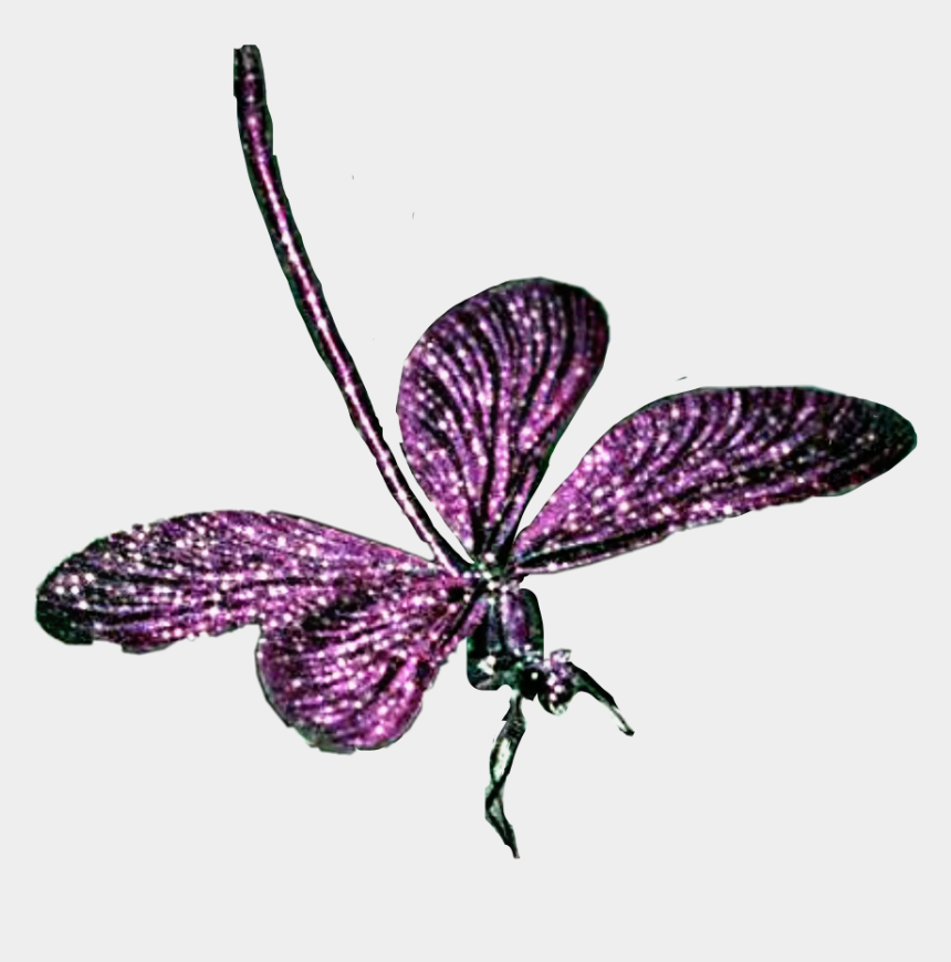 purple dragonfly clipart, Cartoons - Purple Dragonfly Insect Fly Freetoedit - Brush-footed Butterfly