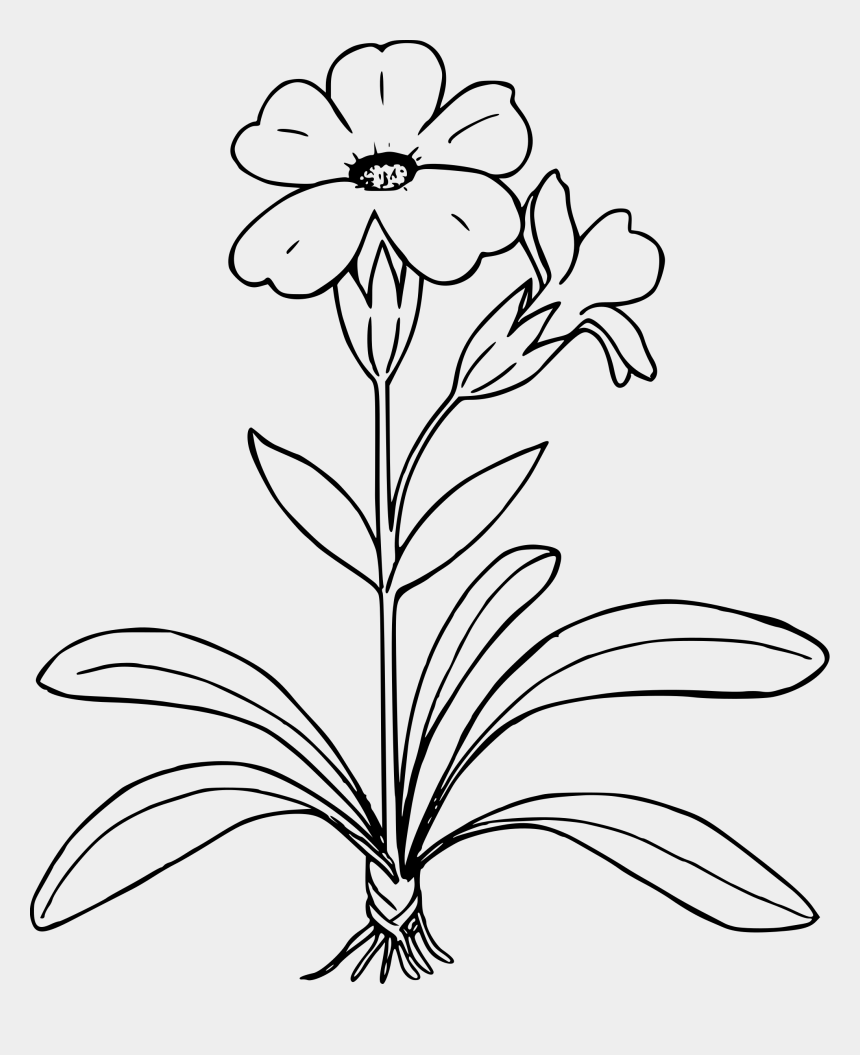 parts of a flower clipart, Cartoons - Plant Clipart Simple - Flower Plant Clipart Black And White