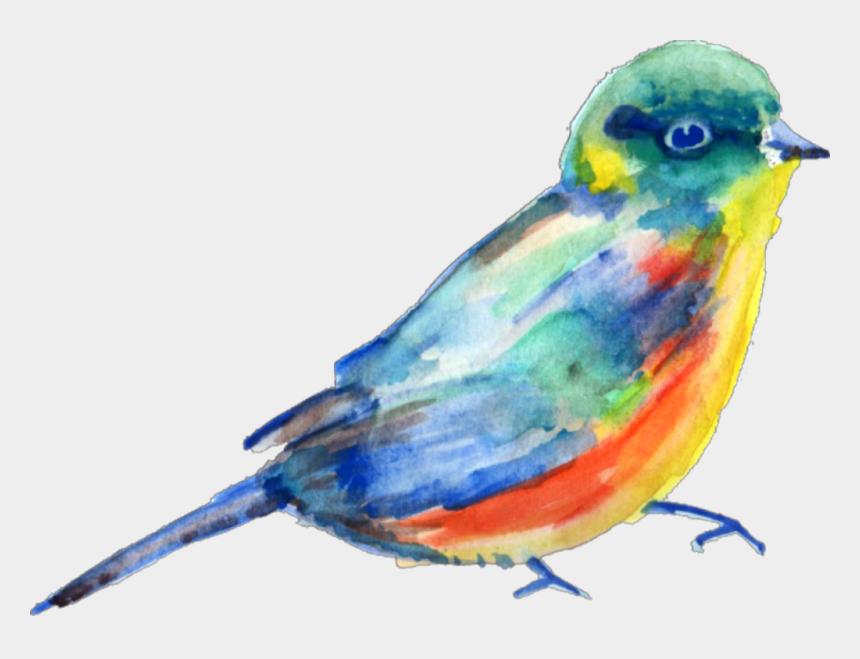 watercolor bird clipart, Cartoons - #ftestickers #watercolor #bird #teals #blue - Watercolor Painting Transparent Png Watercolor Bird