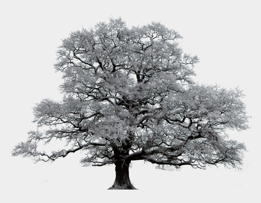 oak tree clipart, Cartoons - Winter Trees - Tree In Winter Transparent Png