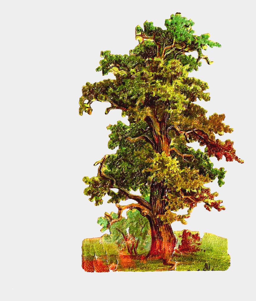 oak tree clipart, Cartoons - Oak Tree Clipart - Vintage Love Tree Png