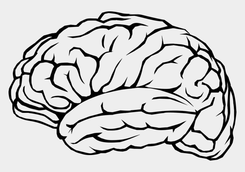 psychology clipart, Cartoons - Psychology Clipart Human Brain - Clipart Brain