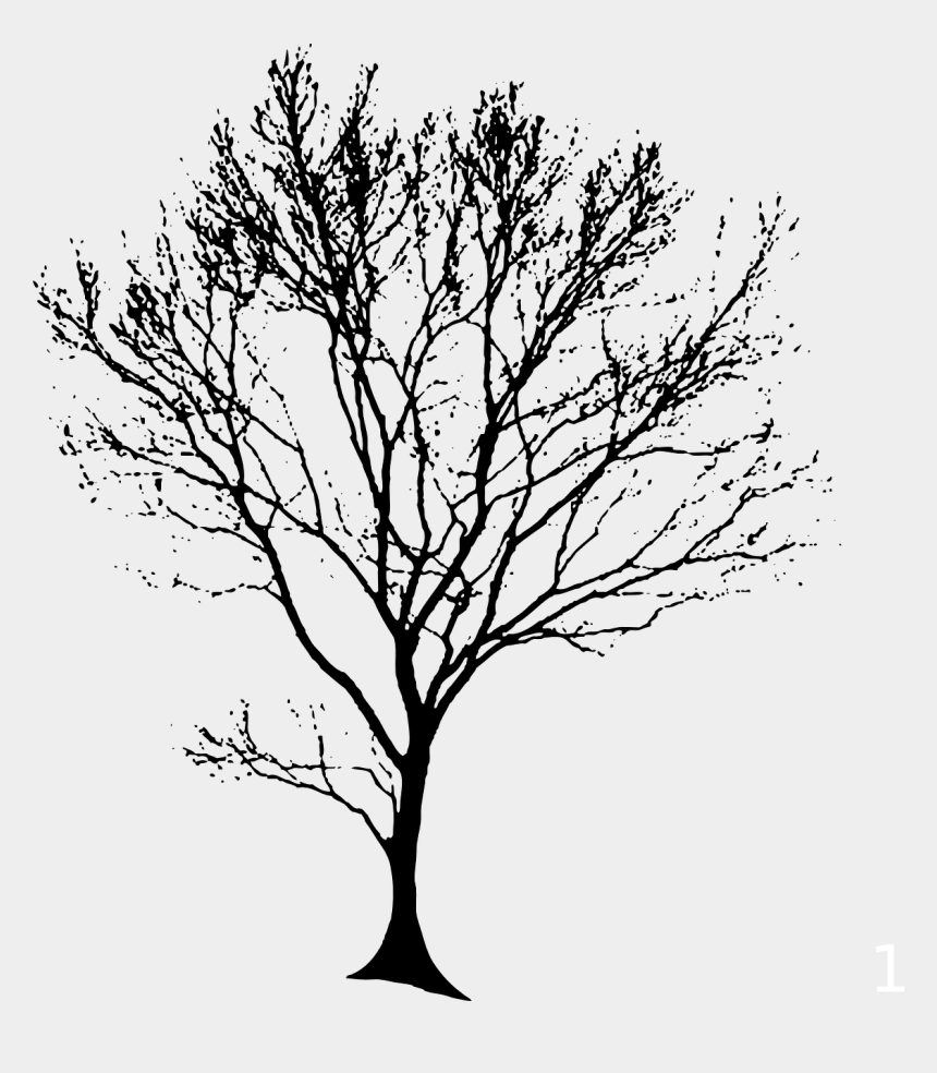 oak tree clipart, Cartoons - Tree Trunk Line Drawing At Getdrawings - Tree Line Drawing Png