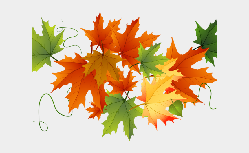 fall leaf clipart, Cartoons - Maple Leaf Clipart Fall Leaves - Transparent Background Clipart Leaves Autumn