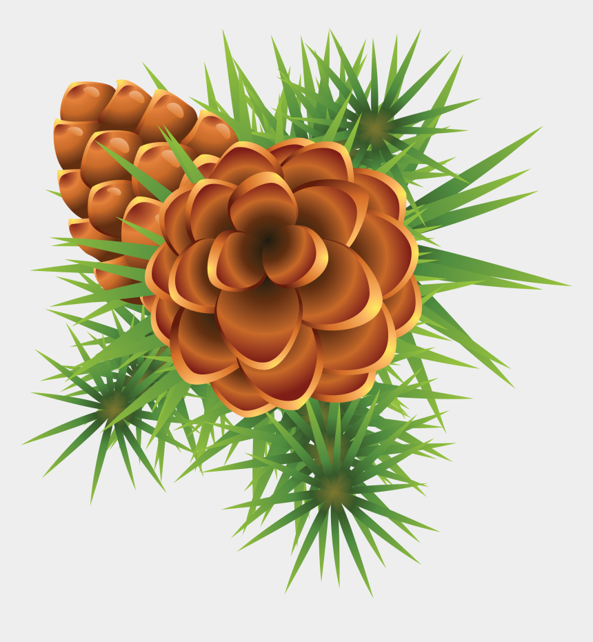 pine cone clip art, Cartoons - Fir Tree Png Images Free Download Picture Ⓒ - Christmas Mistletoe
