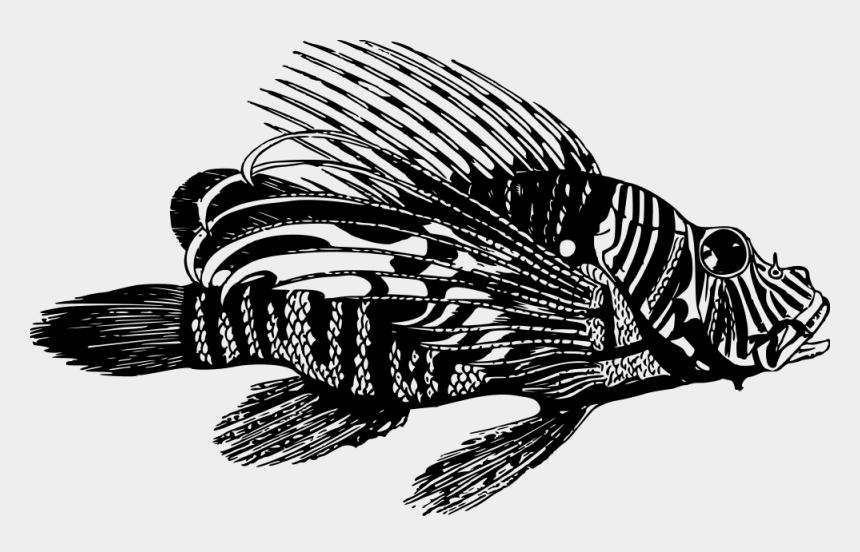 fish clipart black and white, Cartoons - Animal, Peixes, Leão, Oceano, Venenosos, Mar - Green Screen Fish Free