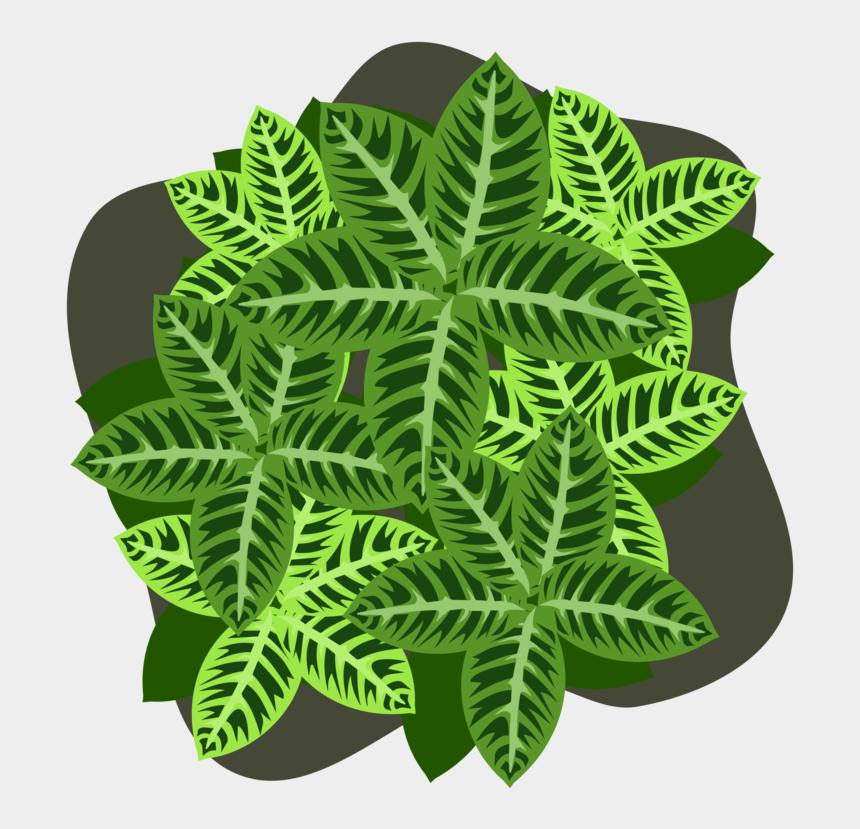 four leaf clover clip art, Cartoons - Four Leaf Clover Plant Four Leaf Clover Shamrock - Fern