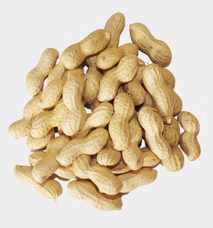 peanut clipart, Cartoons - Bag Of Svg - Peanut