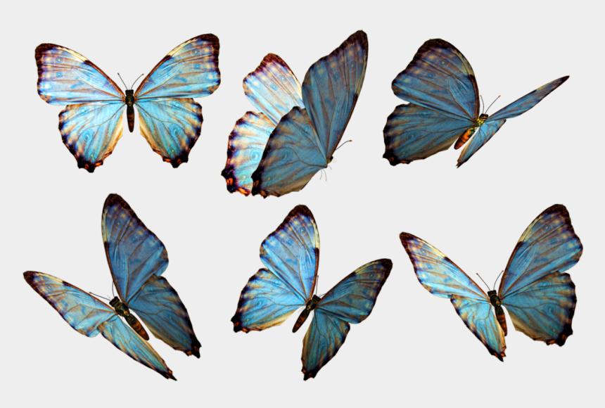 flying butterflies clipart, Cartoons - Photoshop Clipart Beautiful Butterfly - Butterflies Png