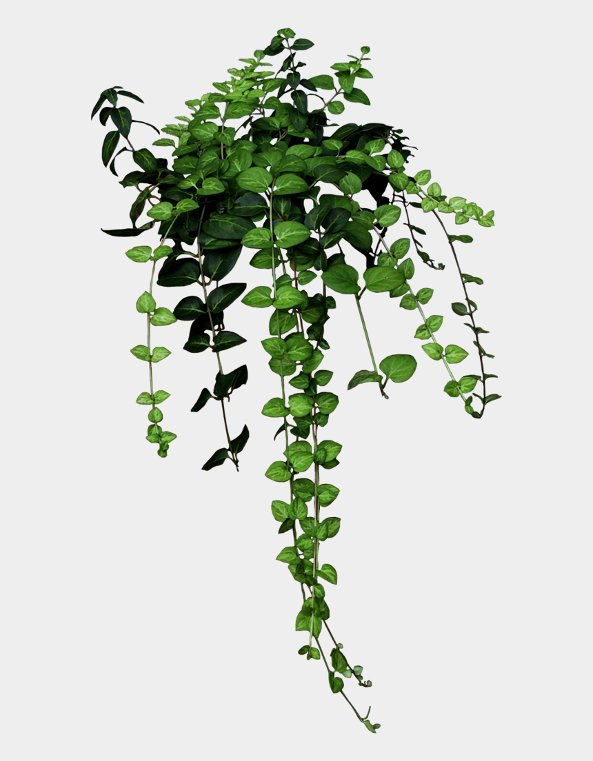 broken wrist clipart, Cartoons - Green Nature Plant Clipart Tumblr 596 1024 - Niche Meme Png Plants