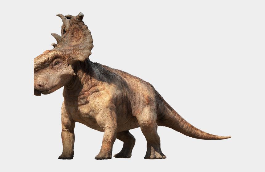 Dinosaurs Clipart Photograph Dinosaur Pachyrhinosaurus Cliparts Cartoons Jing Fm