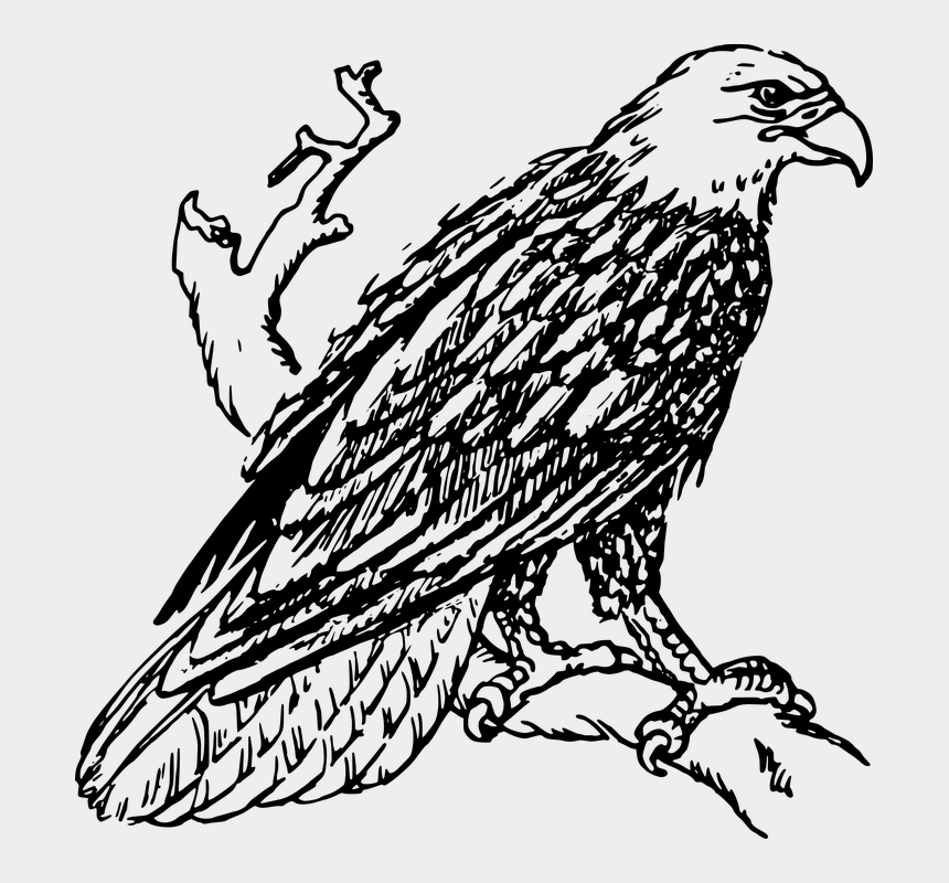 eagle head clipart black and white vector, Cartoons - Eagle, Bird, Bald, Perched, Raptor - Black And White Clipart Eagle