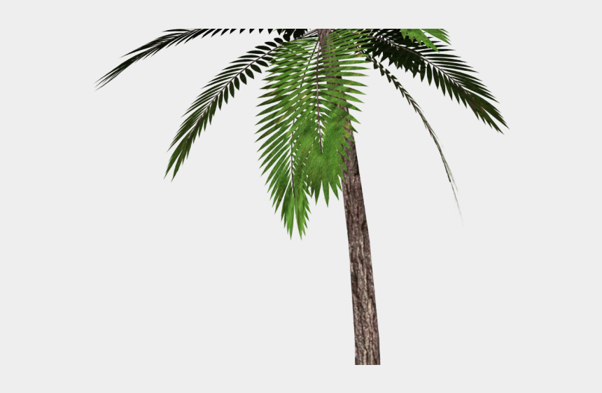 clipart palm trees beach, Cartoons - Date Palm Clipart Single - Transparent Background Palm Tree Png