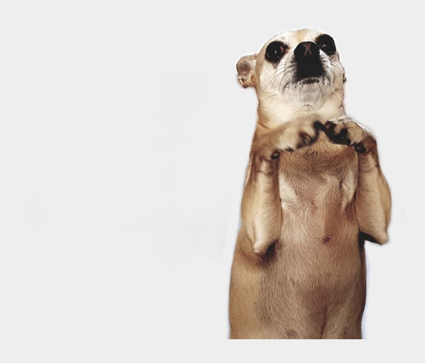 chiwawa clipart, Cartoons - #chihuahua #chiwawa #doggie - Dog Yawns
