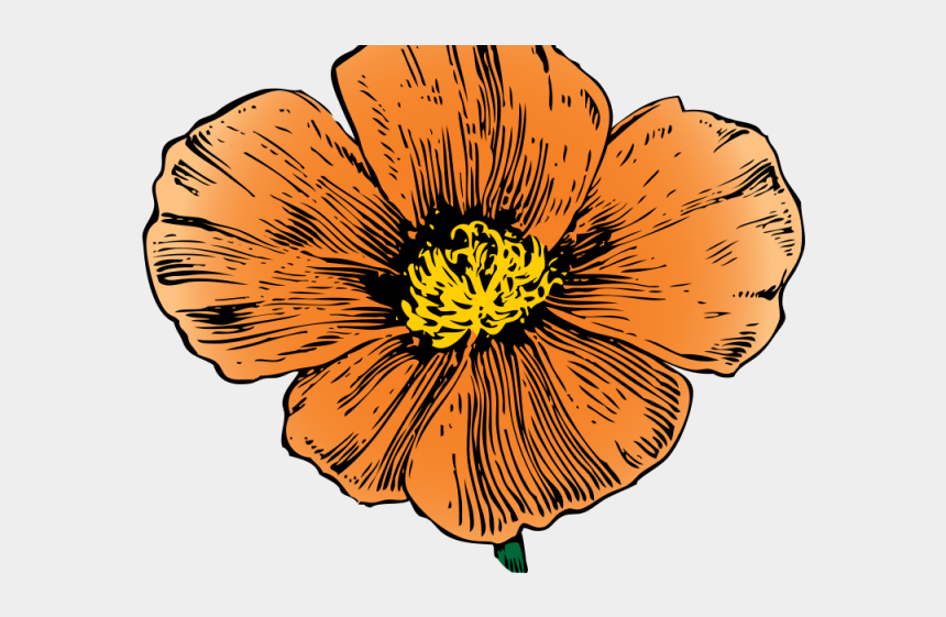 mexican flowers clipart border, Cartoons - Orange Flower Clipart Mexican Flower - California Poppy Png