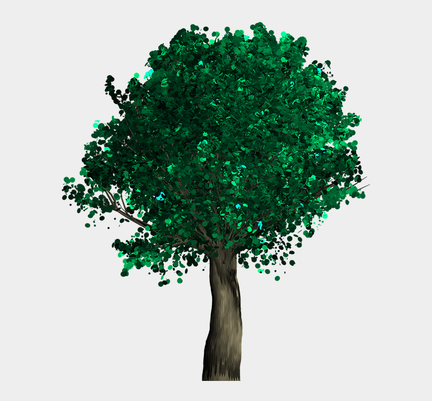 forest path clipart, Cartoons - Tree, Decorative, Green, Foliage, Branch - Apple Life Cycle Real