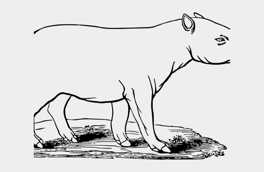 Tapir Clipart Black And White Desenhos Para Colorir De Anta