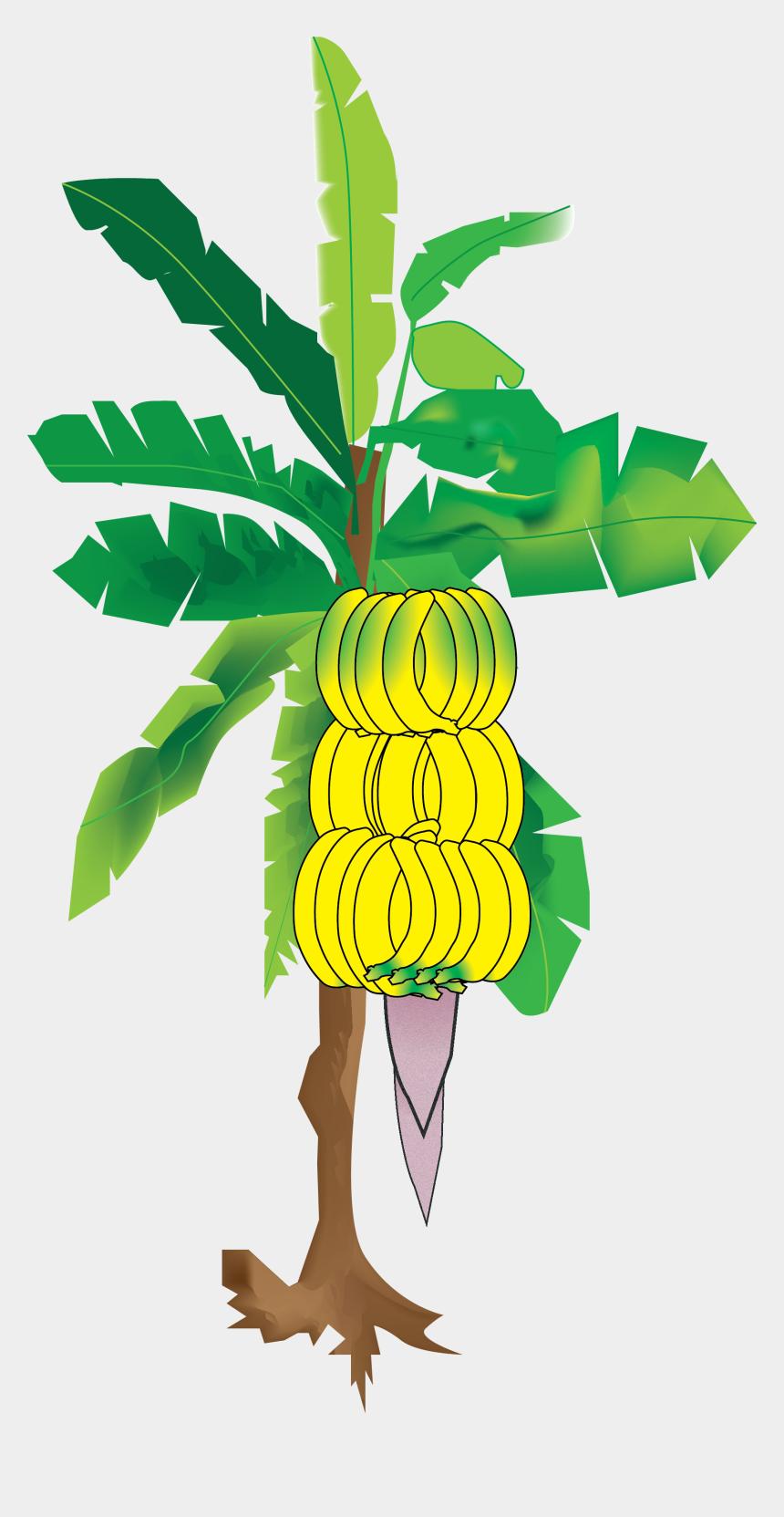 tropical climate clipart, Cartoons - My Illustration Of The Banana Tree From Sun's Eye An - Banana Tree Digital Painting
