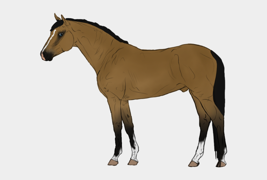 horse and foal clipart, Cartoons - Animated Horse Transparent Background