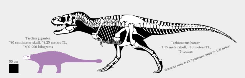 dinosaur skull clipart, Cartoons - Dinosaur Skeleton, Dinosaurs, Skulls, Moose Art, Skeletons, - T Rex Skeleton Stan