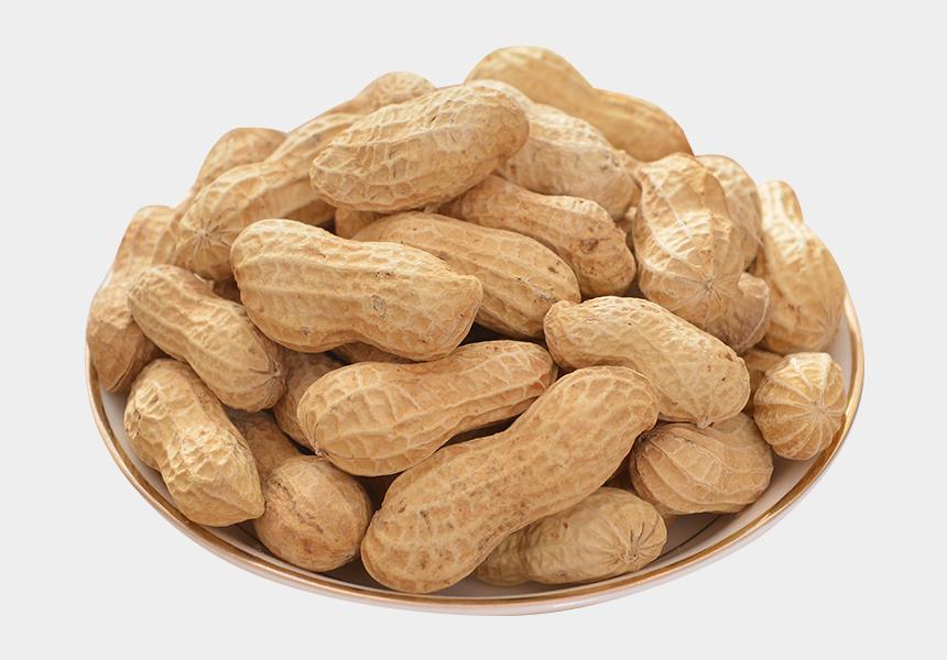 peanut clipart, Cartoons - Peanuts Transparent Groundnut - Peanut