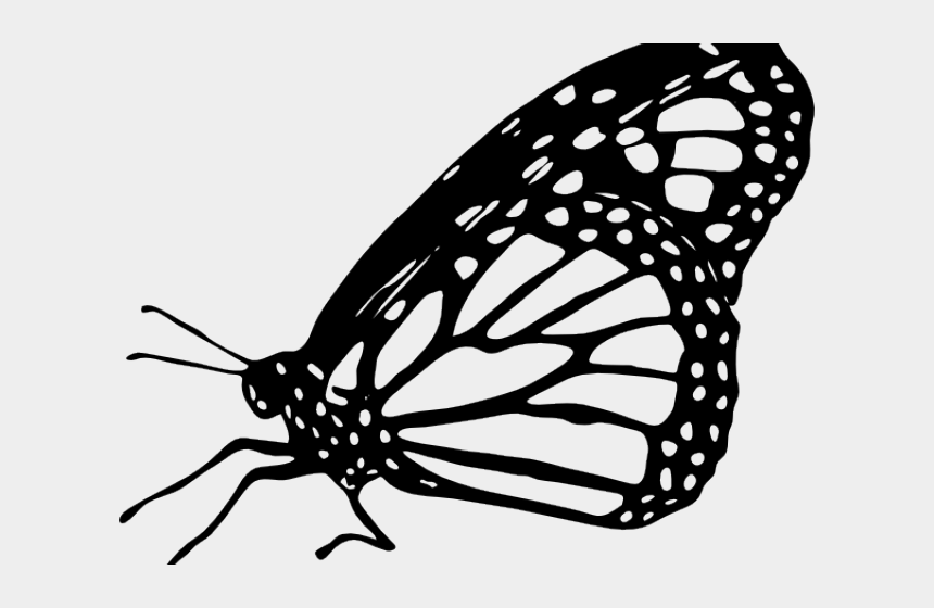 butterfly clipart black and white, Cartoons - Clipart Wallpaper Blink - Monarch Butterfly Black And White