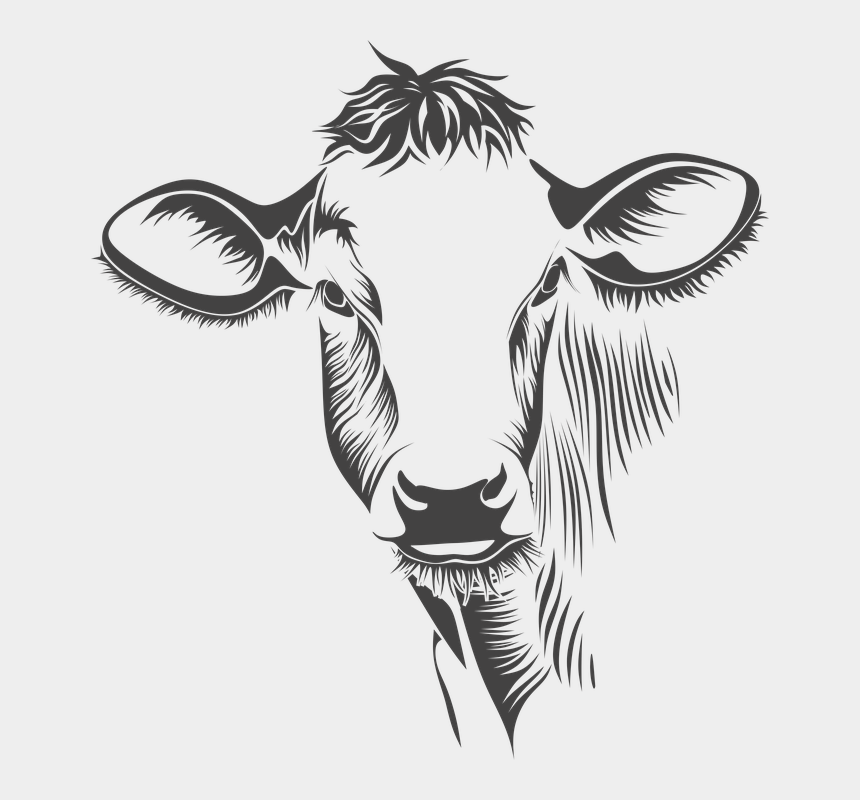 cow clipart black and white, Cartoons - Head, Cow, Cattle, Animal, Farm, Cow - Cow Line Art Png