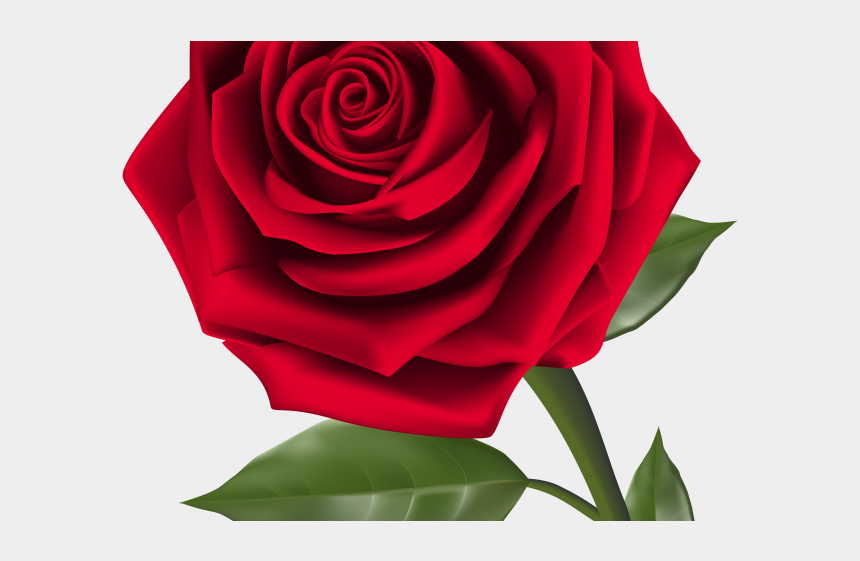 flowers clipart, Cartoons - Flowers Clipart Rose - Good Afternoon Rose Gif
