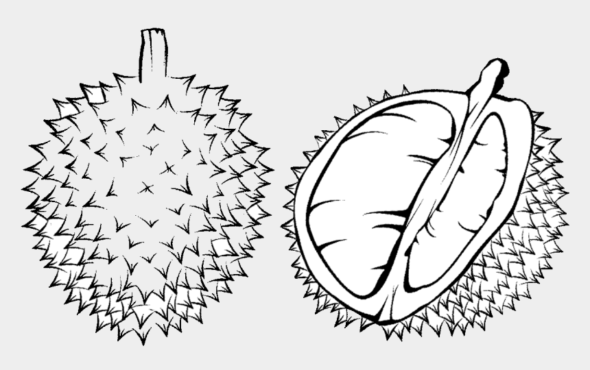 durian drawing durian black and white cliparts cartoons jing fm durian drawing durian black and white
