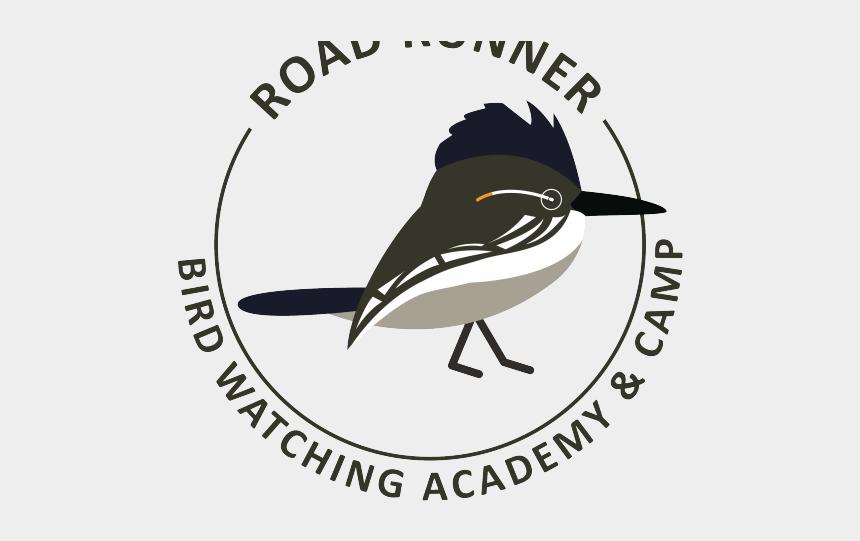 golden retriever clipart, Cartoons - Roadrunner Clipart - Old World Flycatcher
