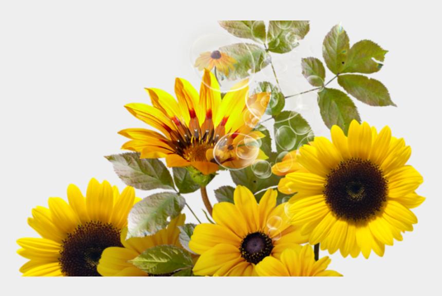 sunflower bouquet clipart, Cartoons - Pin By Trisna On Sunflower Pinterest Sunflowers And - Girassol Png