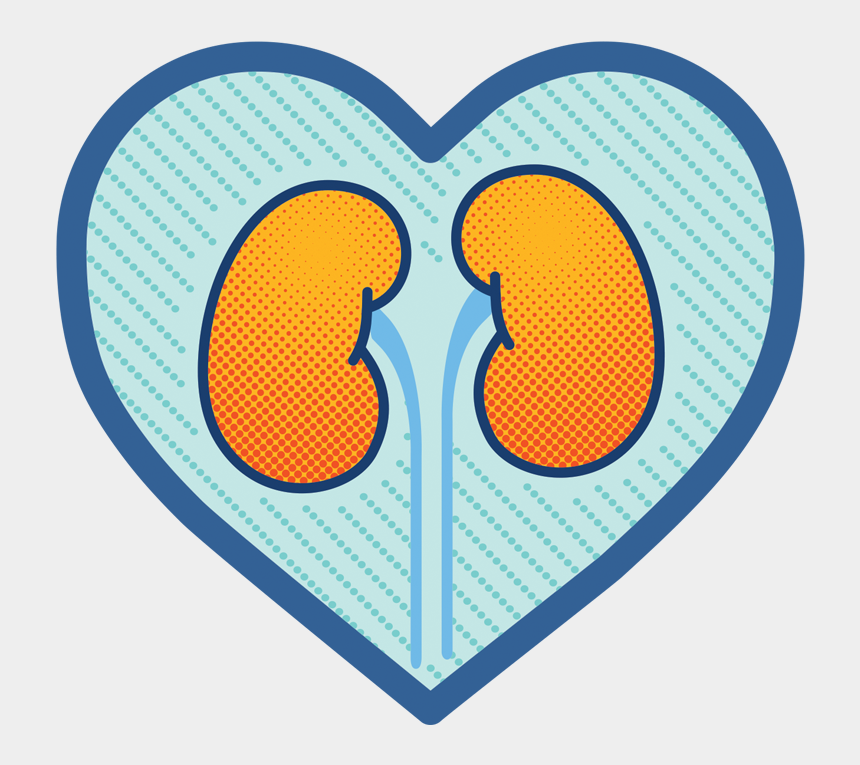 hearts in a row clipart, Cartoons - Heart Clipart Clipart Cool Heart - Kidney