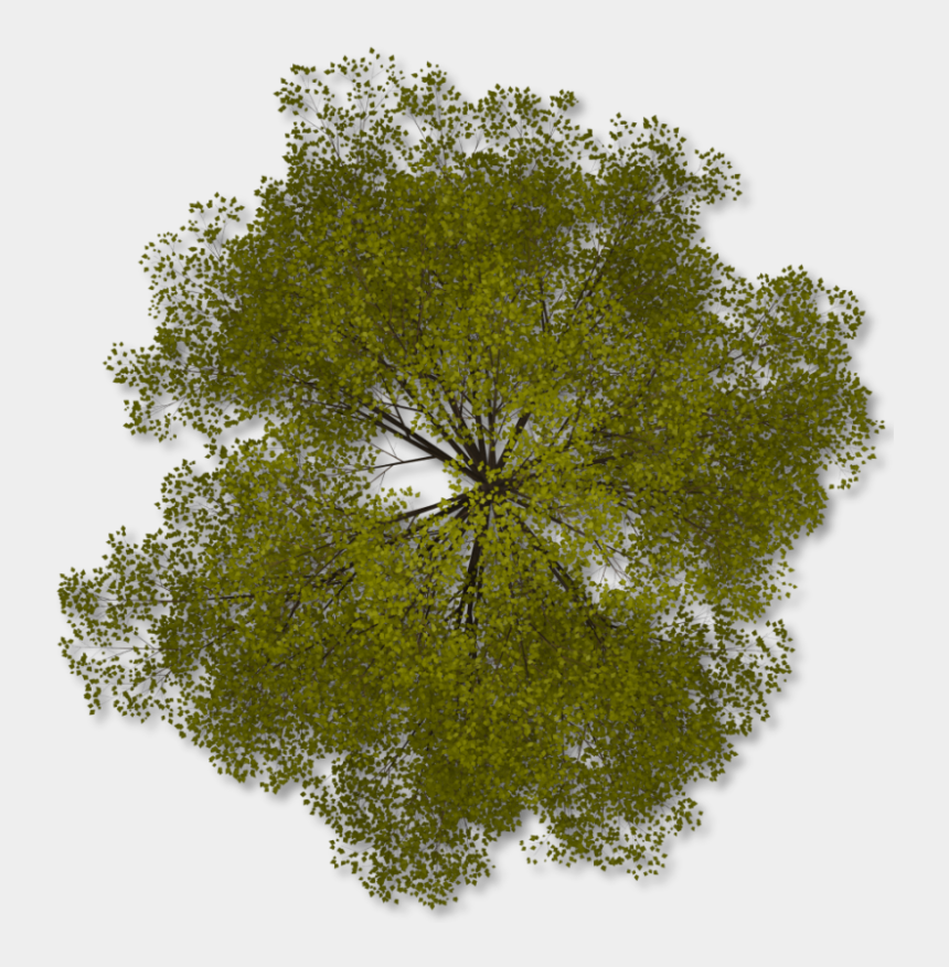 wind tree clipart, Cartoons - Tree Top Png Clipart - Transparent Trees Top Png