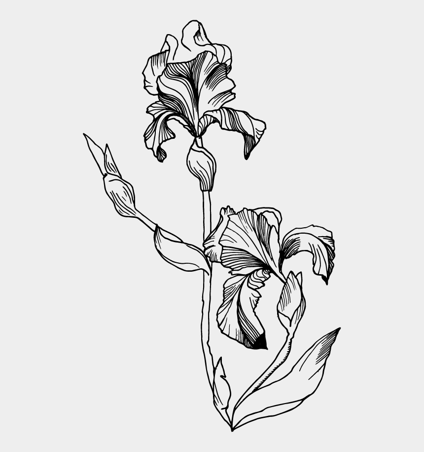 iris clipart black and white, Cartoons - Iris Flower Png - Iris Flower Black And White