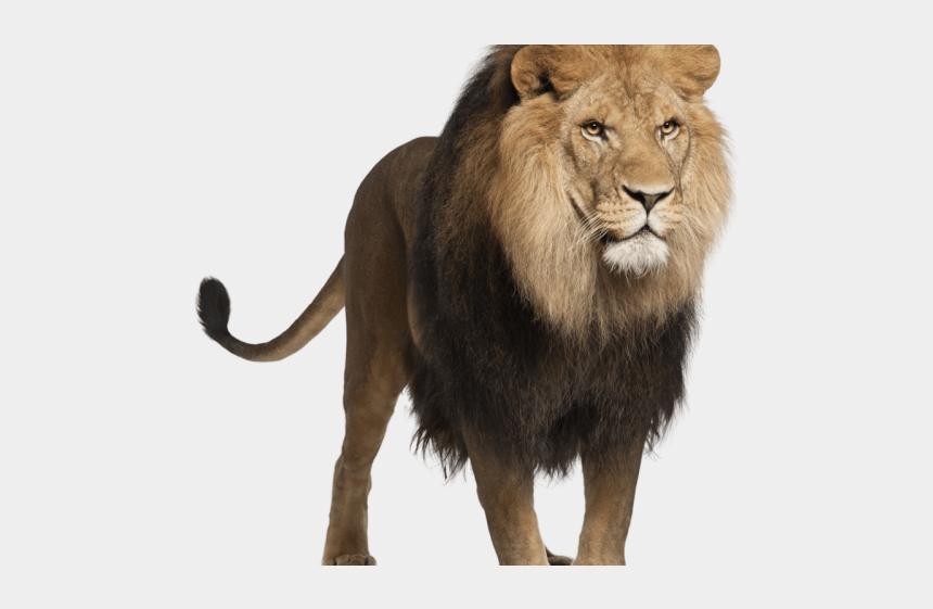 lion clipart transparent, Cartoons - Lion Clipart Transparent Background - Png Animal