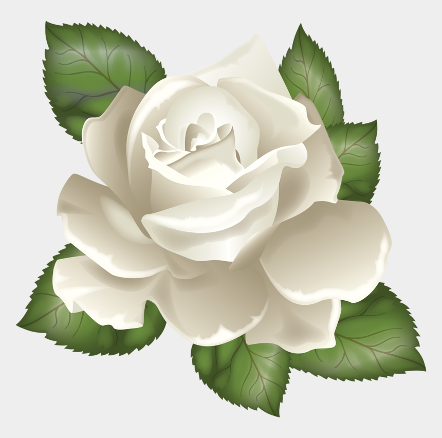 rose leaves clipart, Cartoons - Фотки White Rose Png, White Roses, Page Borders Design, - Transparent Background White Flower Clip Art