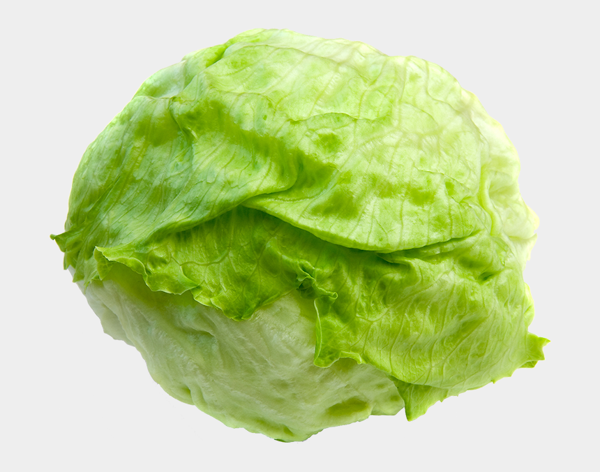 Lettuce Clipart - Png Download (#183611) - PinClipart